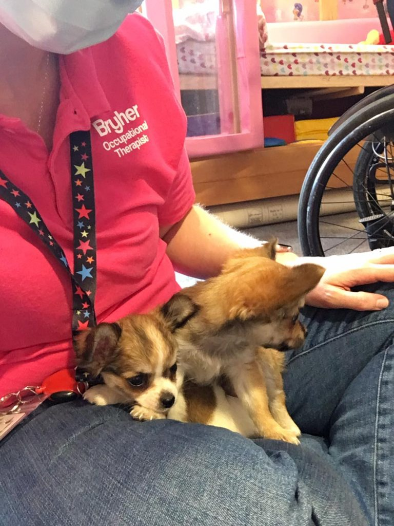 """Bryher sat on the floor of a child's bedroom wearing her """"Bryher Occupational Therapist"""" t-shirt with two chihuahua puppies snuggled onto her lap."""